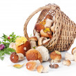 Boletus mushrooms in wicker basket — Stock Photo #24481783