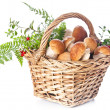 Stock Photo: Boletus mushrooms in wicker basket