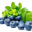 Ripe bilberries — Stock Photo