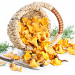 Raw chanterelles in basket on white background — Stock Photo
