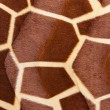 Giraffe skin Pattern texture - Stock Photo