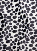 Dalmatian skin Pattern texture — Stock Photo