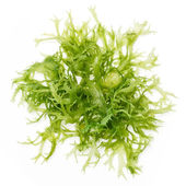 Edible seaweed salad — Stock Photo