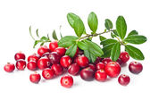 Ripe cranberries with leaves — Stock Photo