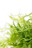 Edible seaweed salad — Stock Photo