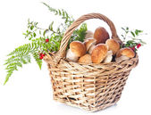 Boletus mushrooms in wicker basket — Stock Photo
