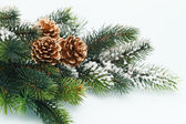 Christmas decoration with Fir branch — Stock Photo