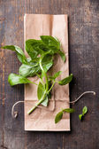 Green basil leaf on textured background — Stock Photo