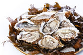 Open oyster Super Speciale with seaweed and ice — Stock Photo
