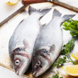 Raw fish sea bass — Stock Photo