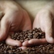 Hand holding coffee beans — Stock Photo #24534769