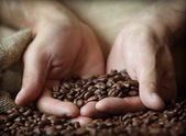 Hand holding coffee beans — Stock Photo