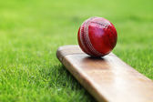 Cricket bat and ball — Stock Photo