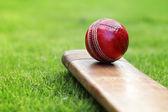 Cricket bat and ball — Stock Photo