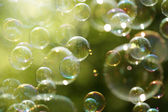 Summer sunlight and soap bubbles — Stock Photo