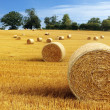Stock Photo: Hay bales in golden field