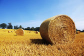 Hay bales in golden field — Stock Photo