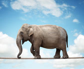 Elephant on tightrope — Stock Photo