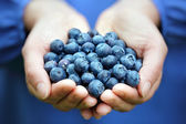 Handful of blueberries — Stock Photo