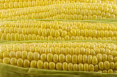 Corn Close Up 05 — Stock Photo