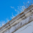 Bo Kaap, Cape Town 098-Grass — Stock Photo
