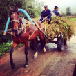 Horse pulling a cart with hay and two men — Stock Photo