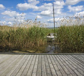 Sailboat among reeds — Stock Photo