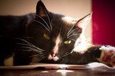 Avkopplande katt — Stockfoto