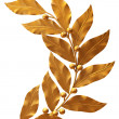Gold branch of laurels on a white background — Stock Photo