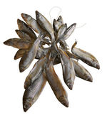 The dried fish — Stock Photo