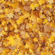 Fallen autumn leaves. seamless image — Stock Photo