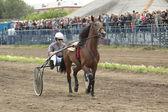 At yarışı bir katılımcı — Stok fotoğraf