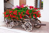 Old-fashioned trolley with geranium — Foto de Stock