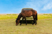 Horse in front of car — Stockfoto