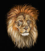 Lion in black — Stock Photo