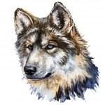 Wolf head — Stock Photo #28679501