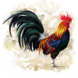 Rooster cock — Stock Photo #36675385