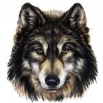 Wolf head — Stock Photo #42242031