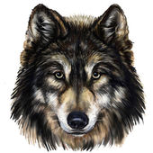 Wolf hoofd — Stockfoto