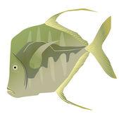 лукдаун рыбы — Cтоковый вектор