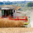 Stock Photo: Combine harvesting wheat.