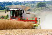 Combine harvesting wheat. — ストック写真