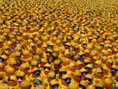 Many yellow rubber ducks — Stock Photo