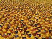 Many yellow rubber ducks — Stock Photo
