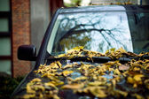 Leaves on a car — Stock Photo