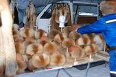 Many fur hats sale — Stock Photo