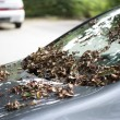 Stock Photo: Leaves on car early autumn