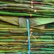 Fresh bamboo for multipurpose — Stock Photo