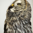 Stock Photo: Owl.