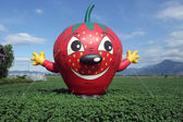 Fresh Strawberry Fields — Stock Photo